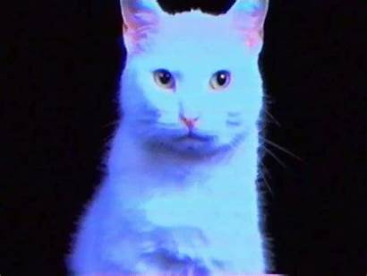 Cat Neon Cool Cats Hipster Indie Animated