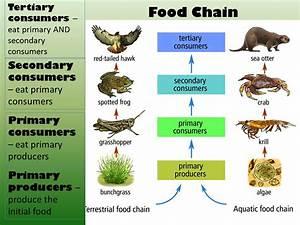Primary Consumers Examples Animals | www.pixshark.com ...