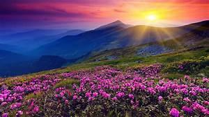 Colorful, Autumn, Sunrise, In, The, Carpathian, Mountains, Wallpaper