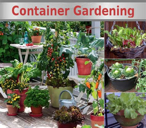 container vegetable garden growing vegetables in containers