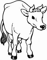 Cow Coloring Printable Animal sketch template