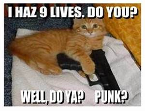 1000+ images about Cats on Pinterest | Funny meme quotes ...