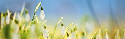fiori di bach e ansia fiori di bach per l ansia