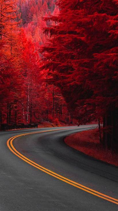 Road Trees Pine 4k Ultra Mobile Wallpapers