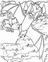 Coloring Bat Bats Printable Fledermaus Colouring Ausmalbilder Nz Sheets Eared Popular Books sketch template