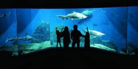 Mta  News  The Maritime Aquarium In Norwalk Is A Quick