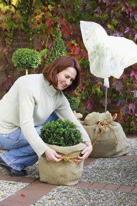 Floragard Kübelpflanzen Winterfest Machen