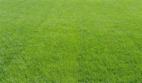 Fall Over-seeding / Winter Lawn