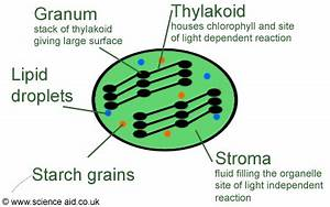Science Aid  Photosynthesis