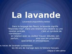 Culture De La Lavande : culture de la lavande ~ Melissatoandfro.com Idées de Décoration