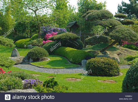 Japanischer Garten Bad Zwischenahn by Botany Pinus Stockfotos Botany Pinus Bilder Alamy