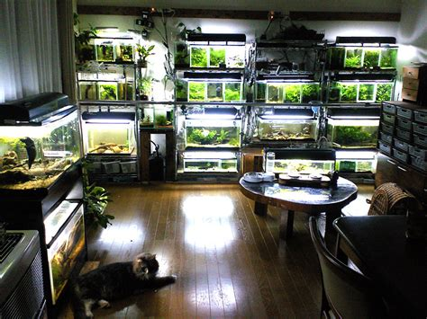 Fuck Yeah Aquascaping  The Living Room Of A Hobbyist Via