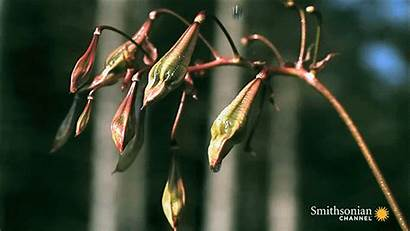 Plants Semi Seed Seeds Exploding Plant Graines