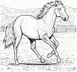 Horses Coloring Pages Printable Everfreecoloring sketch template