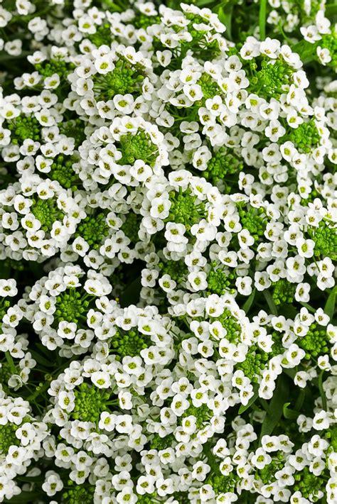 retardant plants rabbit resistant plants hgtv