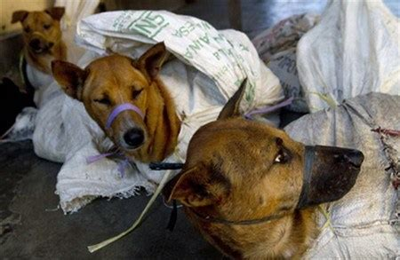 excess feeds dog thefts  violence  vietnam opinion