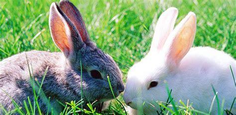kids craft easter bunny ears