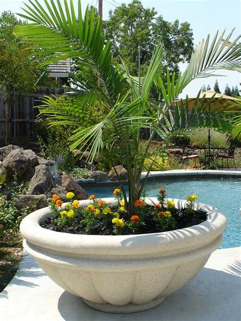 outdoor large plant pots planting tips in large outdoor planters front yard landscaping ideas