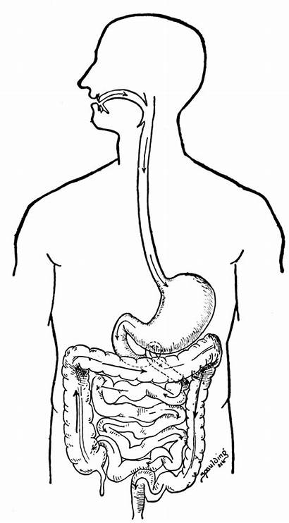 Coloring Pages Human Organs System Digestive Systems