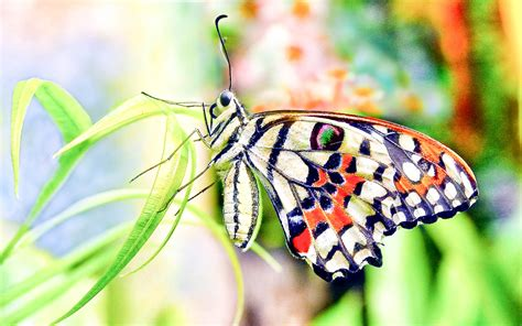 Butterfly Buetiful Hd Wallpapers And Pictures High Quality