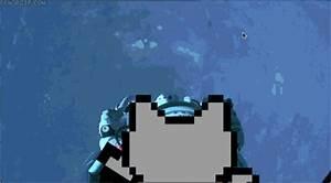 Real Life Nyan Cat GIF by Cheezburger - Find & Share on GIPHY