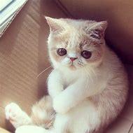 Cute Sad Face Cat