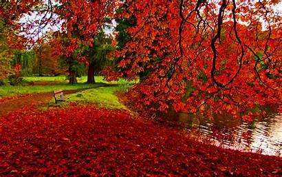 Fall Foliage Wallpapers Background Backgrounds Pixelstalk