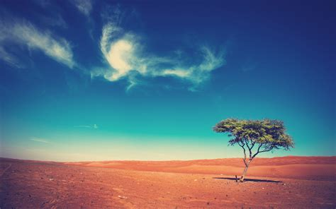 landscape, Trees, Desert Wallpapers HD / Desktop and ...