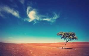 Landscape, Trees, Desert, Wallpapers, Hd, Desktop, And