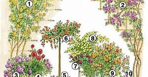 Begleitpflanzen Für Rosen : rosen f r alle f lle mein sch ner garten ~ Orissabook.com Haus und Dekorationen