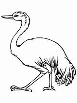 Australian Emu Template Coloring Animal Printable Templates Getcolorings sketch template