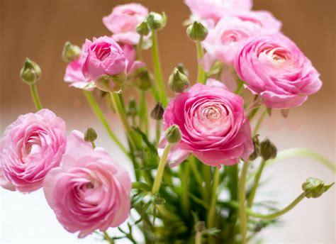 Flores de primavera para decorar tu casa Flores de