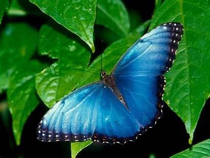 Butterfly Desktop Wallpapers Amazing Butterflies Pretty Buterfly