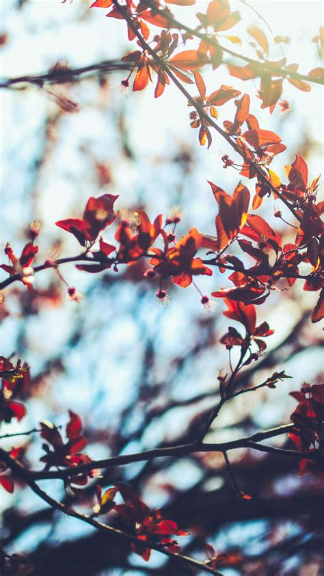 8 Free Autumn Inspired Iphone 7 Plus Wallpapers Preppy