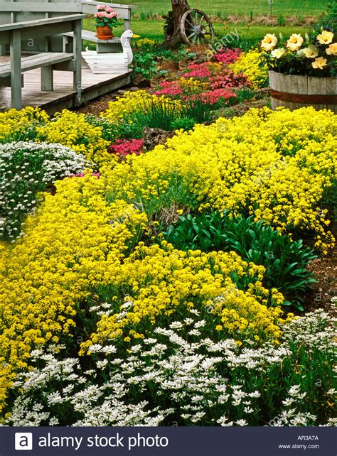 colorful ground cover colorful blooming rock garden with ground cover plants of