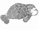 Manatee Coloring Zentangle Preview sketch template
