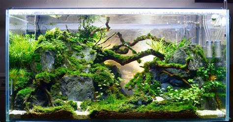 jenis kayu  aquascape dunia akuarium