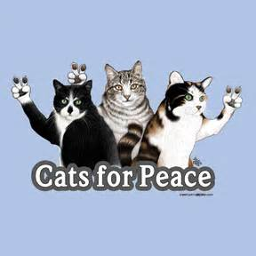 cats for peace t shirt