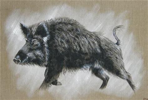 sanglier codile laresche peintre animalier artistes