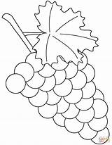 Grapes Coloring Pages Printable Grape Supercoloring Drawing Fruit Leaf Again Bar Looking Case Don Categories sketch template