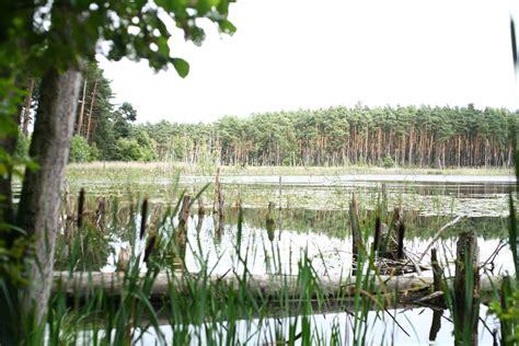 mueritz nationalpark hexenwaeldchen