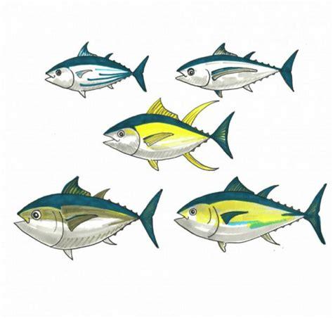 eat tuna      fish