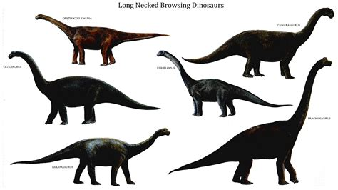 1000 Images About Dinosaur Theme Images On Pinterest