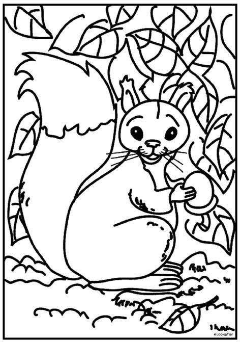 Kleurplaat Eekhoorn by N 13 Kleurplaten Eekhoorn