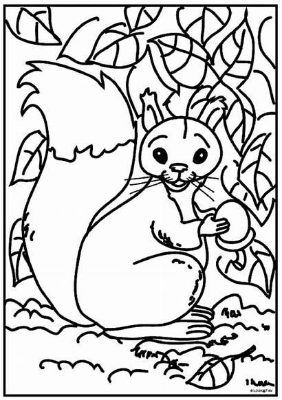 Eekhoorn Kleurplaten Squirrel Coloring Fun Sheets