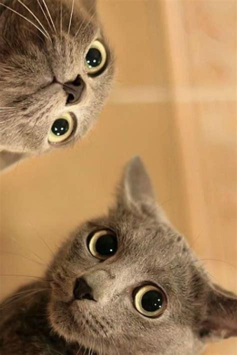 Funny Cat Iphone Wallpaper Wallpapersafari