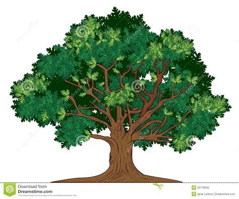 Tree Of Images Vector Eiken Boom Stock Foto S Afbeelding 23778533
