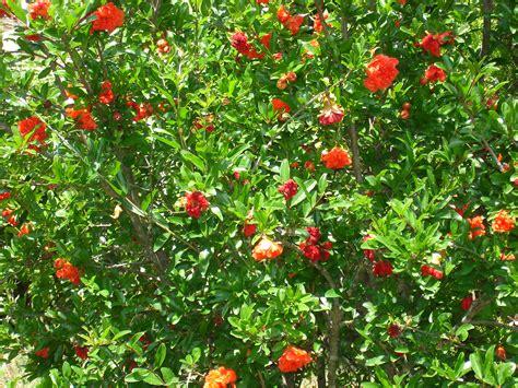 deco interieur chambre grenadier à fleurs photo 8 8 encore des fleurs