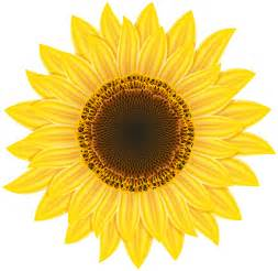 Transparent Sunflower Clip Art