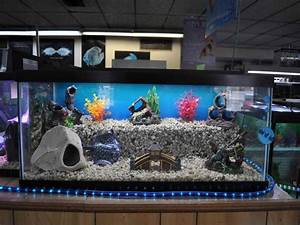 How To Make Fish Tank Decorations At Home - Home ...